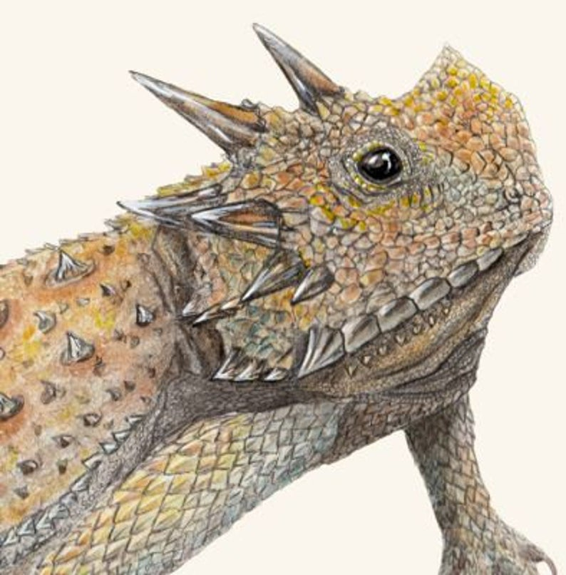 "(c) Aall Forms of Life ""Horned Lizard"""