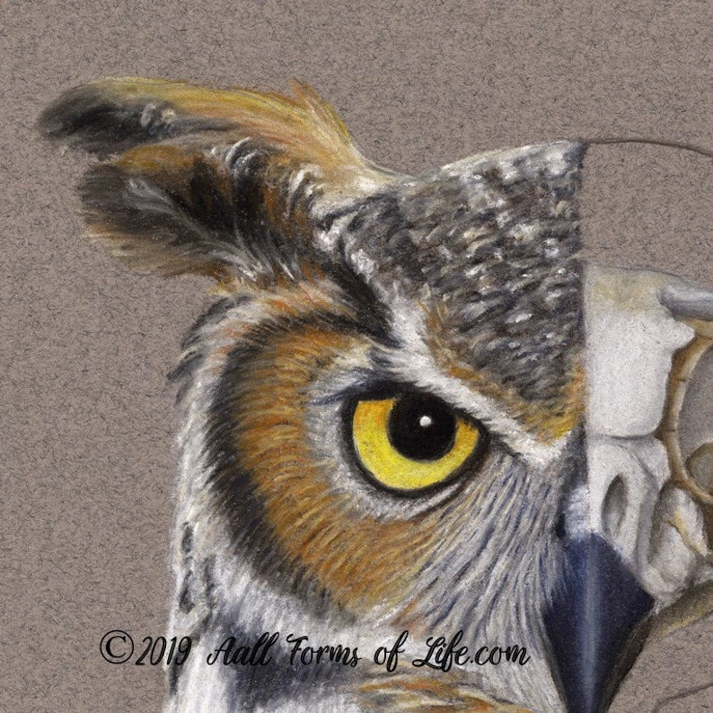 "(c)  Aall Forms of Life ""Great Horned Owl Composite"""