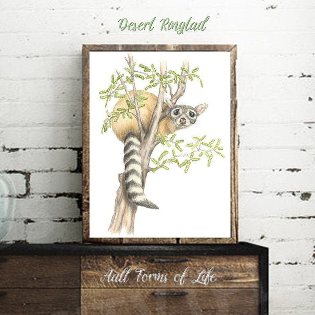 "(c)  Aall Forms of Life ""Desert Ringtail"""