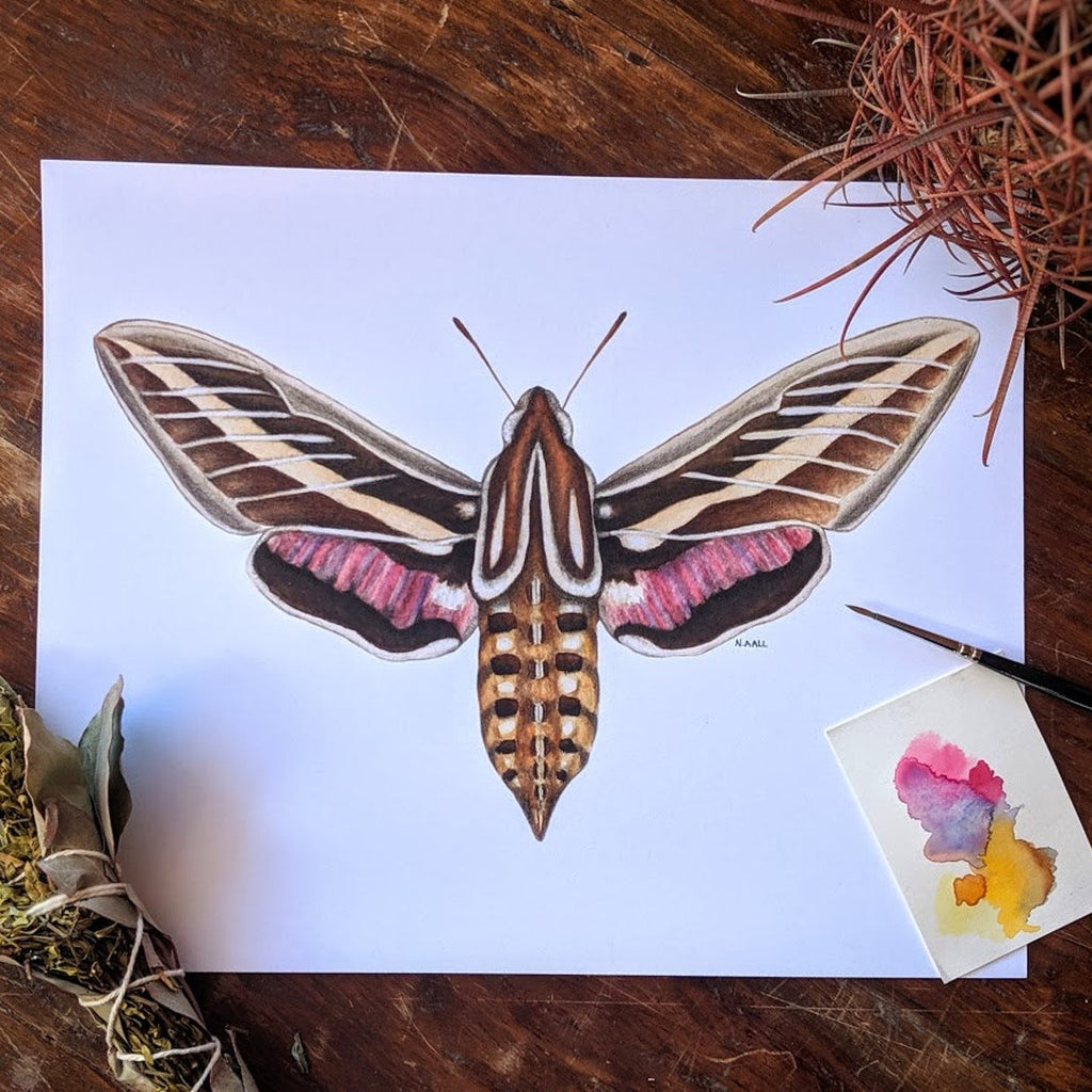 "(c) Aall Forms of Life ""Sphinx Moth"""