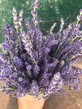 Dried lavender bunch- dried lavender bouquet- handpicked grosso and hycott giant lavender flowers