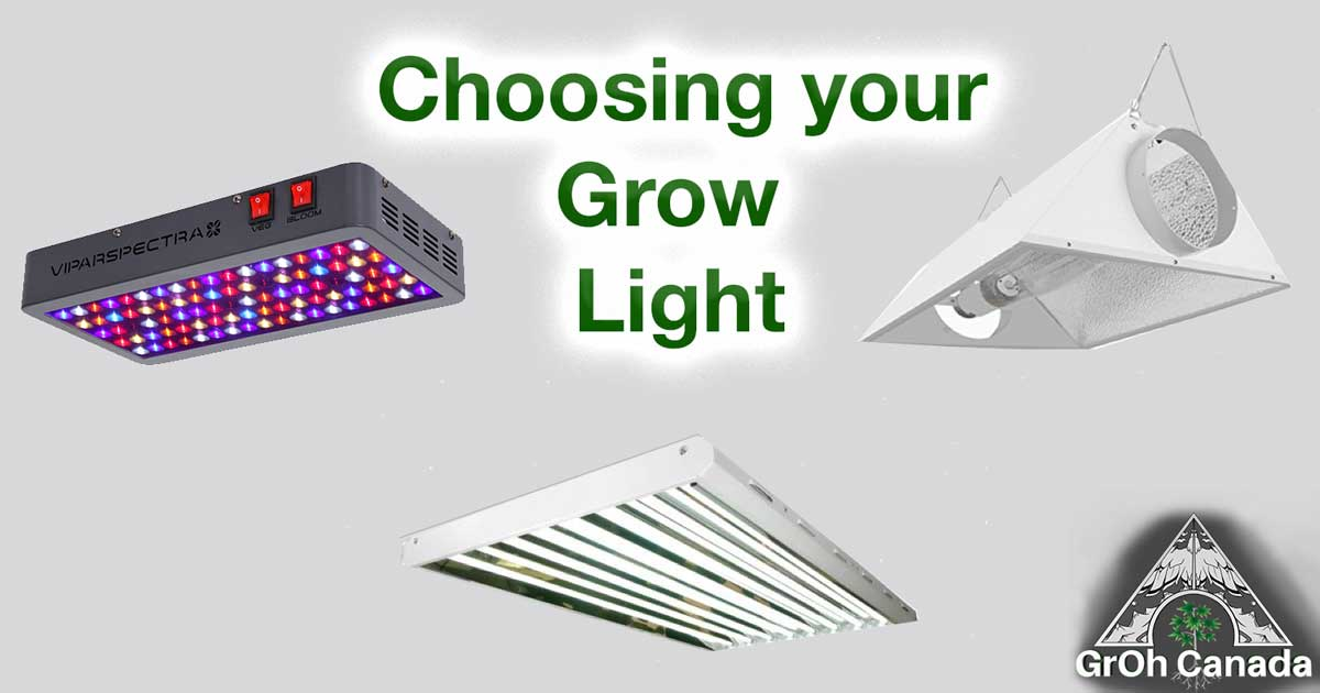 #4: How much light do your plants need and what is the best type?