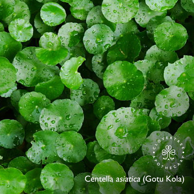 Gotu Kola Brightening Serum (with plant stem cells)