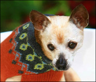 Rolled Neck Fairisle Jumper | Dogs and the City