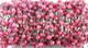 Ruby Chalcedony Faceted Wire Wrapped Rosary, (RS-RCH-38) - Beadspoint
