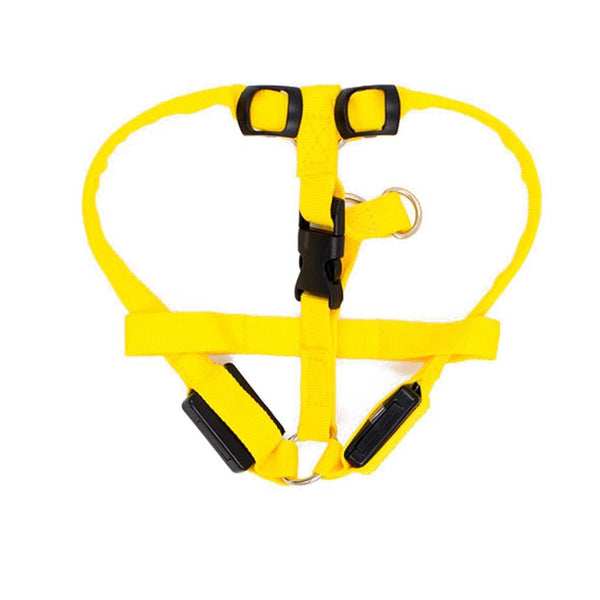 Bright Night Walker Harness