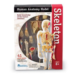 Learning Resources Skeleton Model
