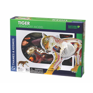 Tiger Anatomy Model - Thames and Kosmos 5060282510586