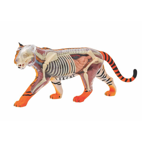 Image of Tiger Anatomy Model - Thames and Kosmos 5060282510586