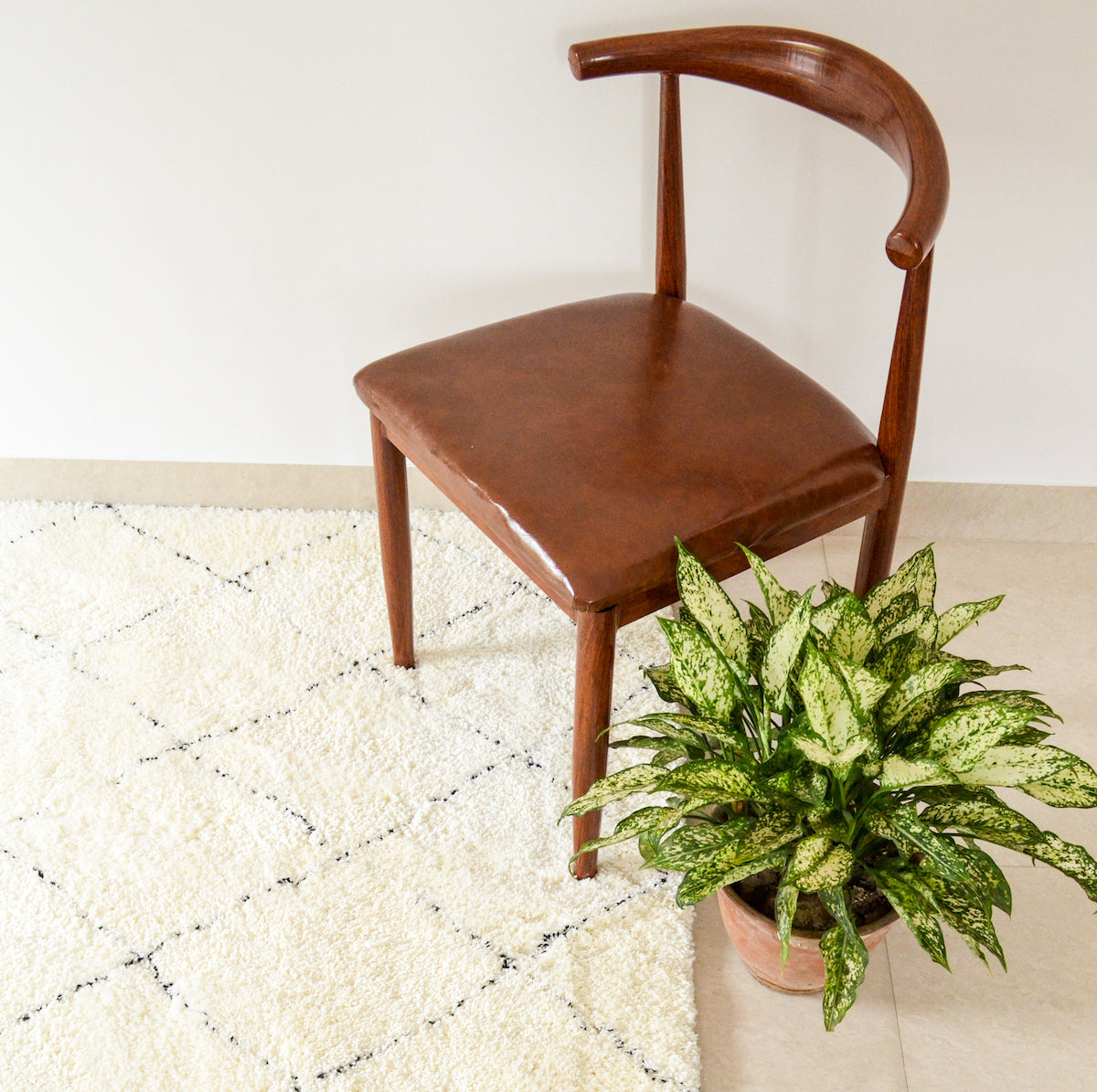 Potted Plant and rug