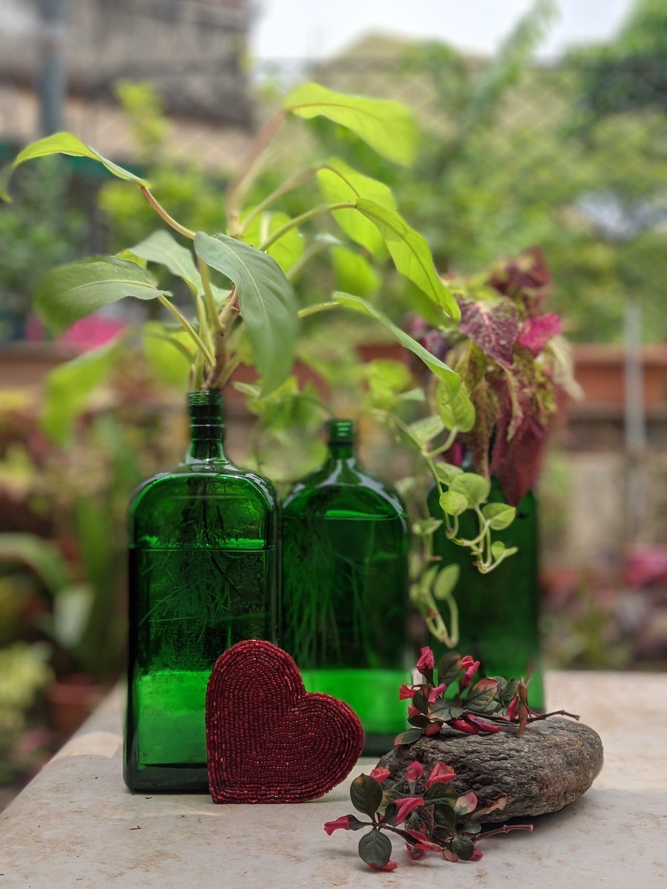 green bottles and plants