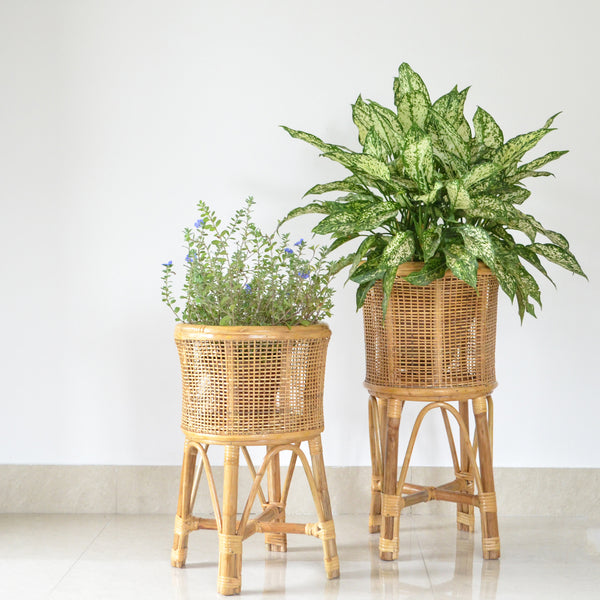 Cane Planter Set