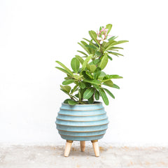 Blue Planter with Stand