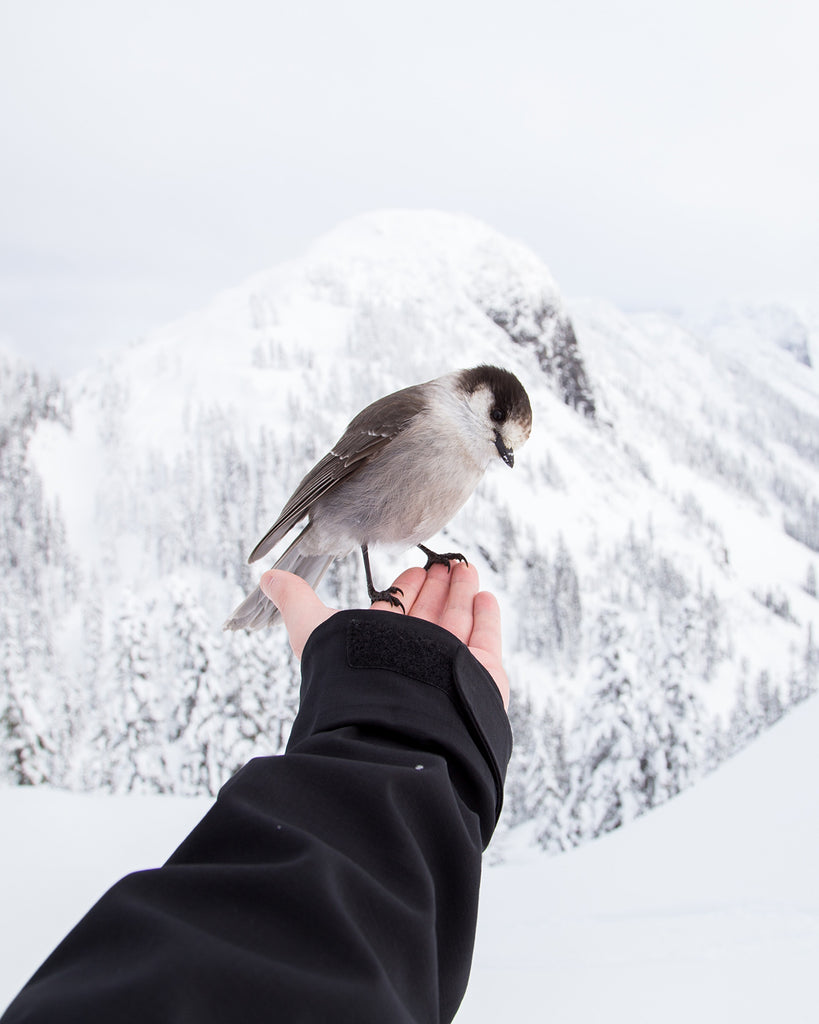 Winter hiking is for the birds