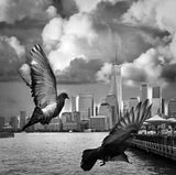"""Birds in Flight New York"" by Colette Horner, Photography Print"