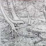 The Reach of Nature by Lawrence Baker, Graphite on Paper