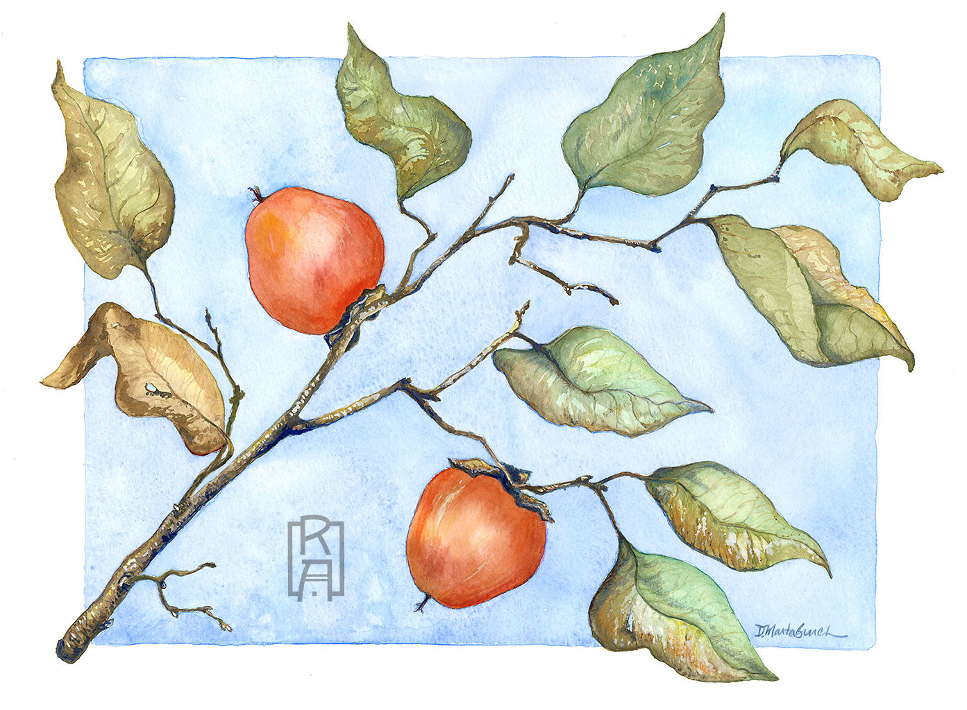 Wild Persimmons watercolor by Denise Marta-Burch