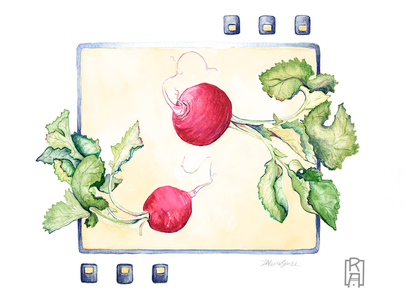 Radishes - watercolor by Denise Marta-Burch