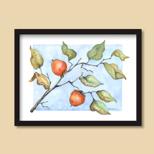 Wild Persimmons | Watercolor Painting by Denise Marta-Burch