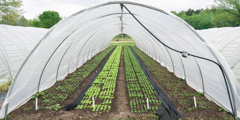 Caterpillar Tunnel with crops growing inside