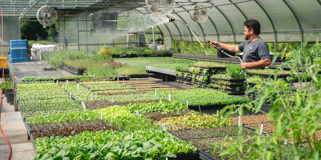 Ray Watering the micros and transplants