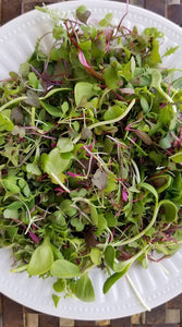 Garden Punch Salad Mix - 4oz