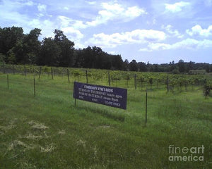 East Texas Vineyard - Art Print