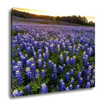Gallery Wrapped Canvas, Beautiful Bluebonnets Field At Sunset Near Austin Texas In Spring