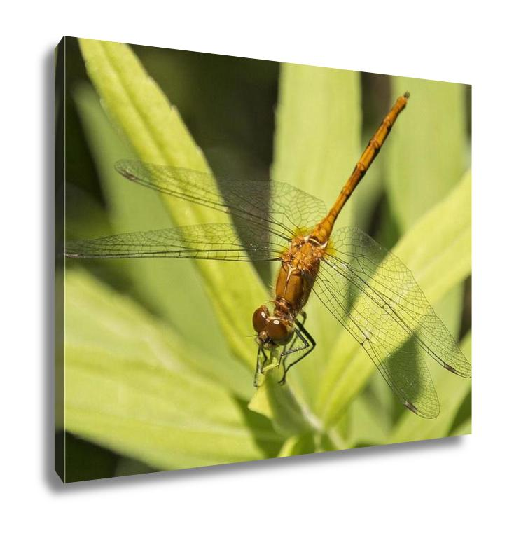 Gallery Wrapped Canvas, A Dragonfly Resting On A Leaf In Minnesota