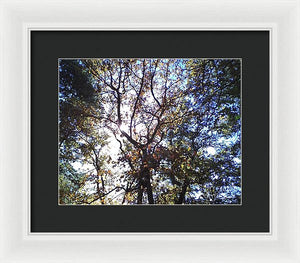 Sunlight Seeping In - Framed Print