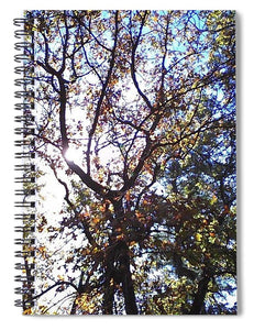 Sunlight Seeping In - Spiral Notebook