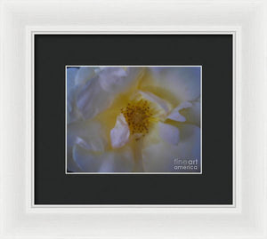 Up Close And Beautiful - Framed Print