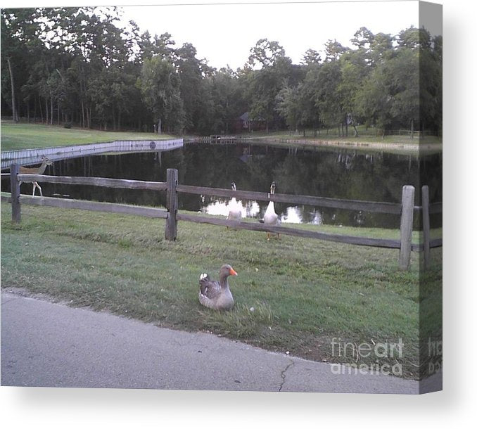 Wildlife At The Pond - Canvas Print