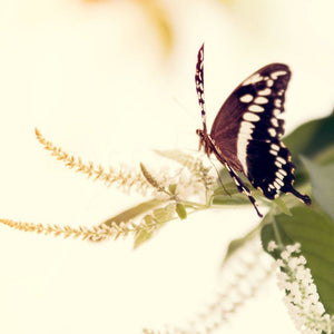 Butterfly Light | Nature Photograph-Tracey Capone Photography