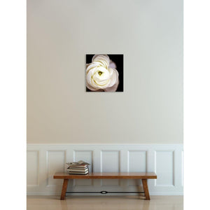 Center Light No. 3 | White Ranunculus-Wood Mounted Photograph-Tracey Capone Photography