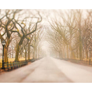 Central Park | New York City Art-Tracey Capone Photography