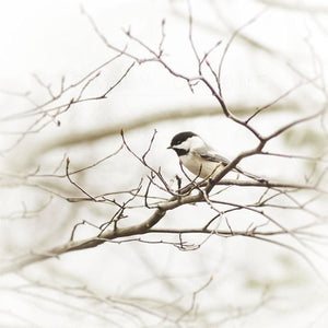 Chickadee No. 2 | Bird Photography-Tracey Capone Photography