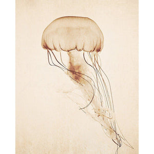 Curiosities | Jellyfish Photography-Tracey Capone Photography