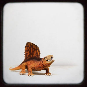 Dimetrodon | Dinosaur Art For Kids Rooms Tracey Capone Photography
