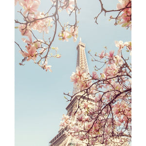 April in Paris | Magnolia Photograph - Tracey Capone Photography