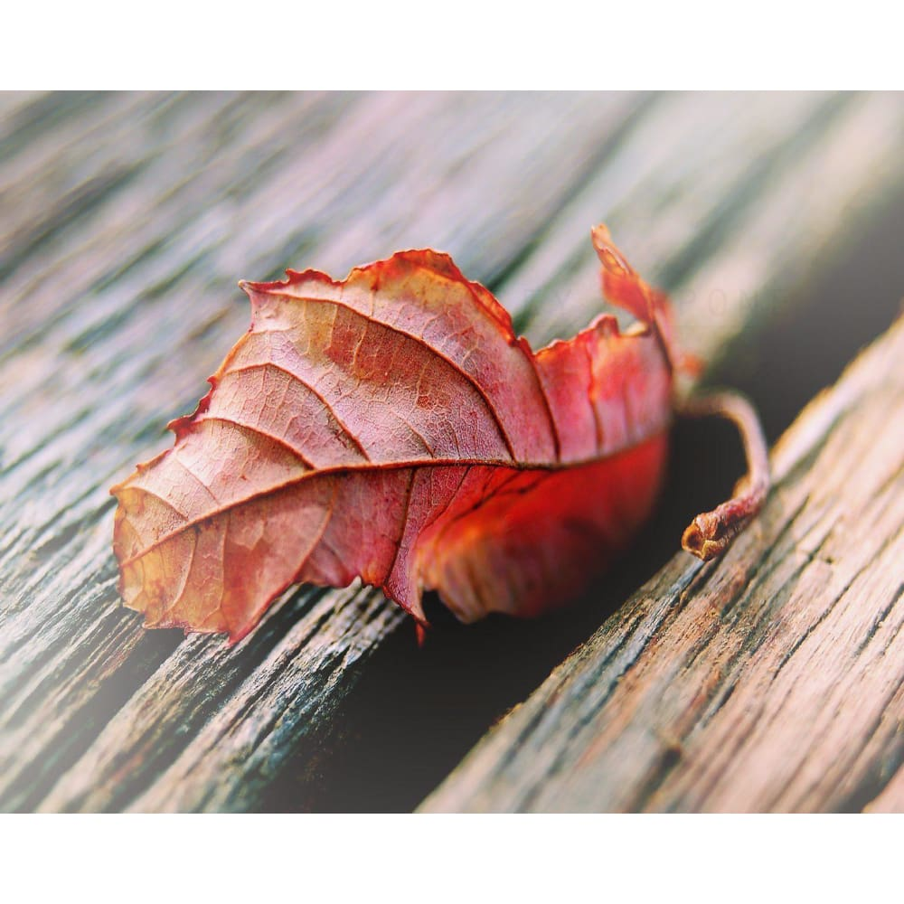 Fall Home Decor Red Leaf Art Nature Photography Tracey Capone Tracey Capone Fine Art