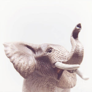 Baby Elephant No. 2 - Tracey Capone Photography