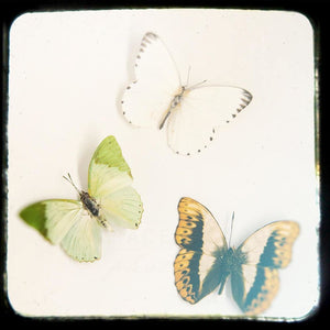 Mariposas No. 1 | Butterfly Wall Decor-Tracey Capone Photography