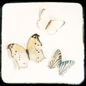 Mariposas No. 2 | Picture of Butterflies-Tracey Capone Photography