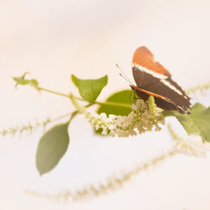Perch | Orange & Brown Butterfly-Tracey Capone Photography