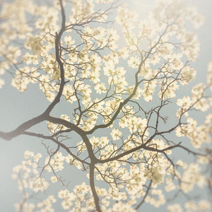Above | White Dogwood Flowers & Blue Sky - Tracey Capone Photography