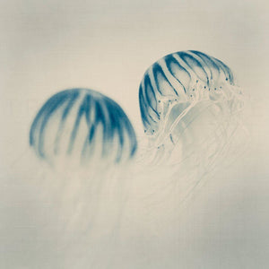 Pigment No. 2 | Nature Photography, Jellyfish-Tracey Capone Photography
