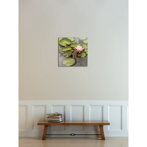 Pink Lotus Photograph | Nature Photography And Wall Art Tracey Capone Photography