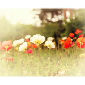 Poppyland | Nature & Landscape Decor-Tracey Capone Photography