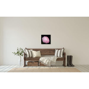 Portrait of a Pink Ranunculus No. 3-Wood Mounted Photograph-Tracey Capone Photography